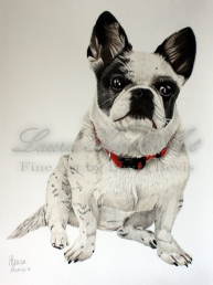 Elly the Frenchie