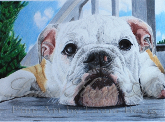 """Lazy Pup"""