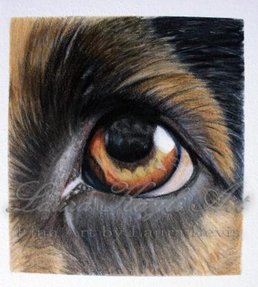 Dog Eye Study