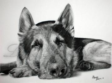 """Sleepy Pup"" 8x10 Charcoal Drawing"